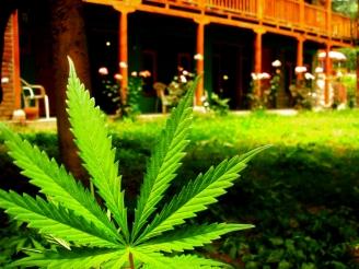High Times Cannabis Cup 2013